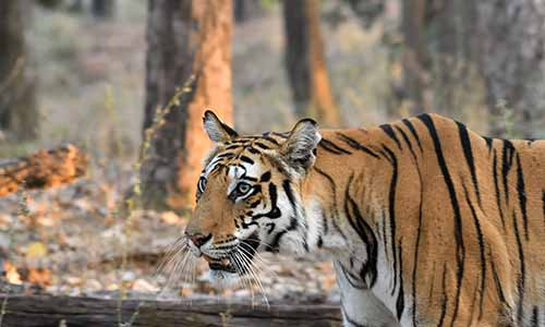 5 Days Maharashtra Wildlife Tour