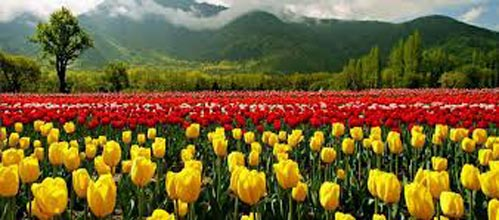 Kashmir-gulmarg-pahalgam-jammu (8 Days / 7 Nights)