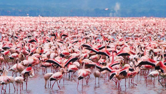 Highlights Of Kenya With Lake Nakuru Tour