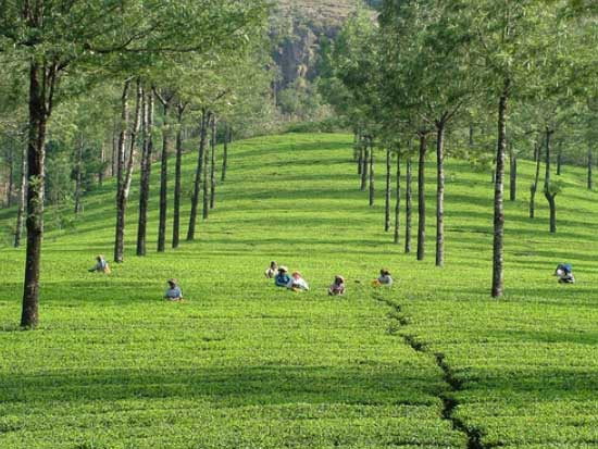Green Paradise of Kerala Tour