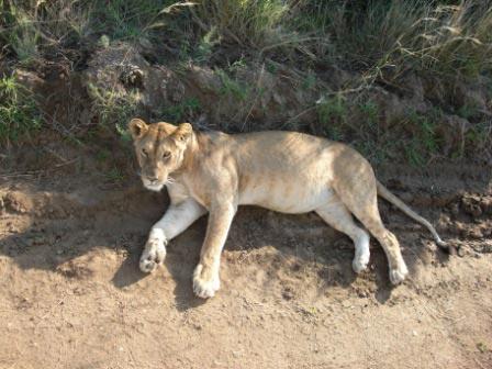Amboseli 2 Nights/Samburu 2 Nights/Maasai Mara Flying Package