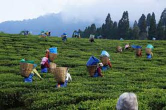 7 Days Guwahati With Shillong Tour Package