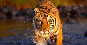 Sundarban Safary Tour Package – Provasin Holidays