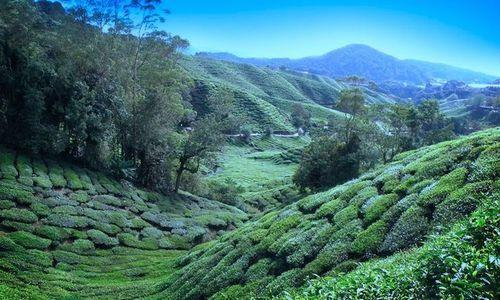 Luxurious Getaway to Darjeeling – Tour Package