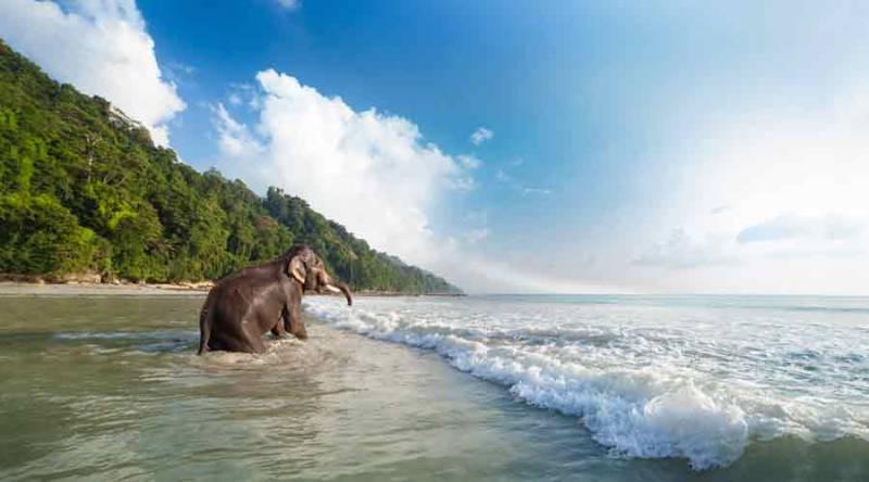 Andaman Joy