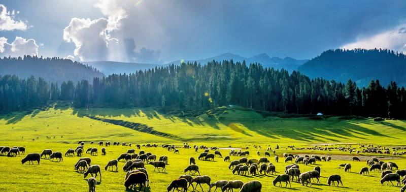 Zenith of Beauty-kashmir