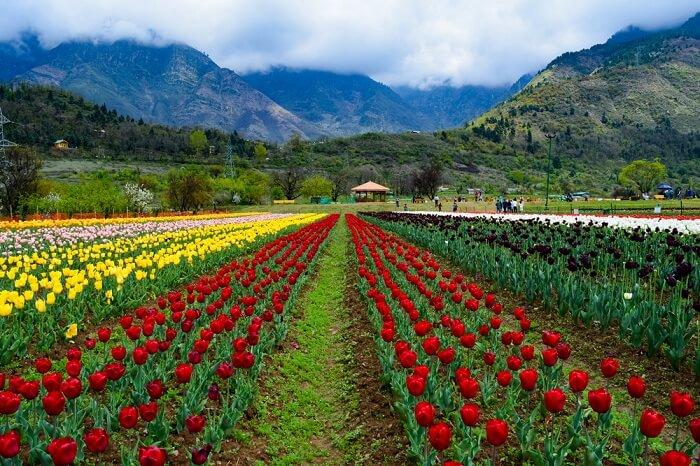 Blissful Kashmir
