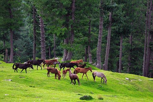 Flexi Honeymoon Kashmir