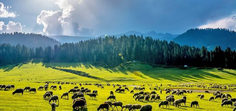 Glimpse of Srinagar