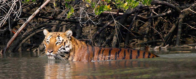 Royal Sundarban Tour