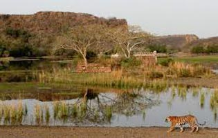Fort & Forest (Jaipur 2N - Ranthambore 2N) Tour
