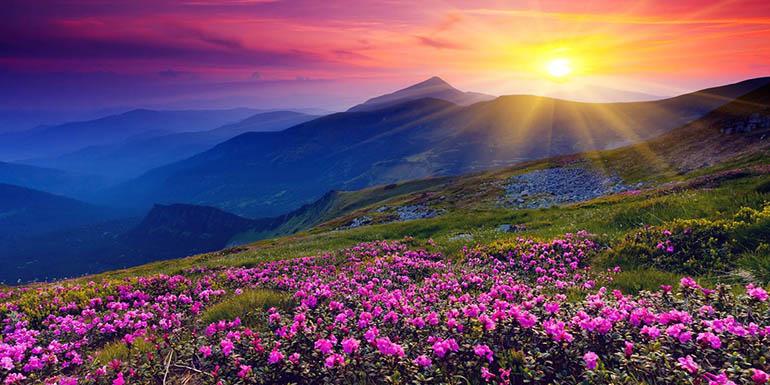 Kashmir Tulip Special Tour