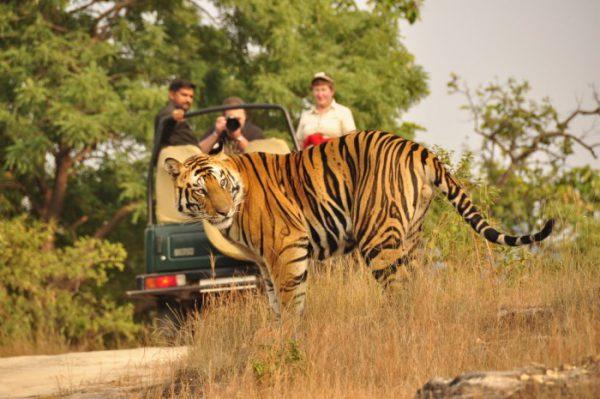 Mysore & Ooty Sojourn Tour