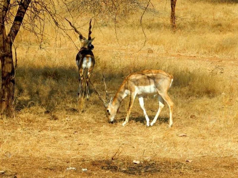 Jungle & Beach Trip Of Gujarat Tour