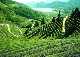 Best of North East India Tour