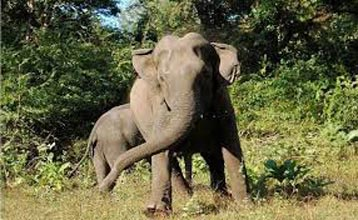 Tour Package OF Periyar