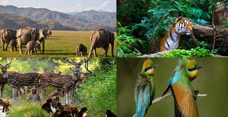 Delhi - Nainital - Corbett Tour
