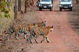Chandigarh With Corbett Weekend Tour
