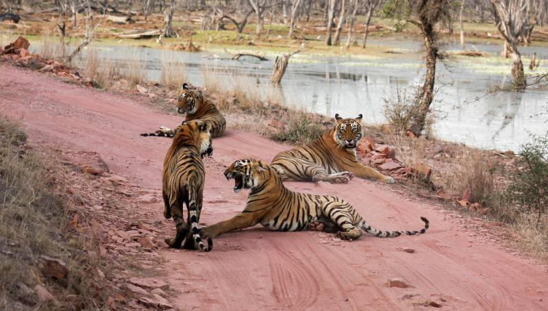 Jaipur With Ranthambhore Tour