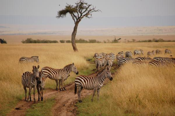 7 days kenya holiday safari Tour