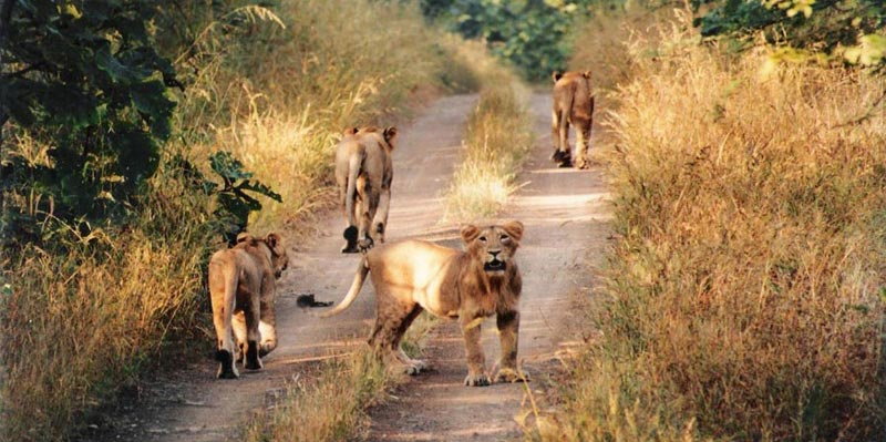 Gujarat With Wildlife Tour