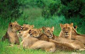 Safari Of Gujarat Tour