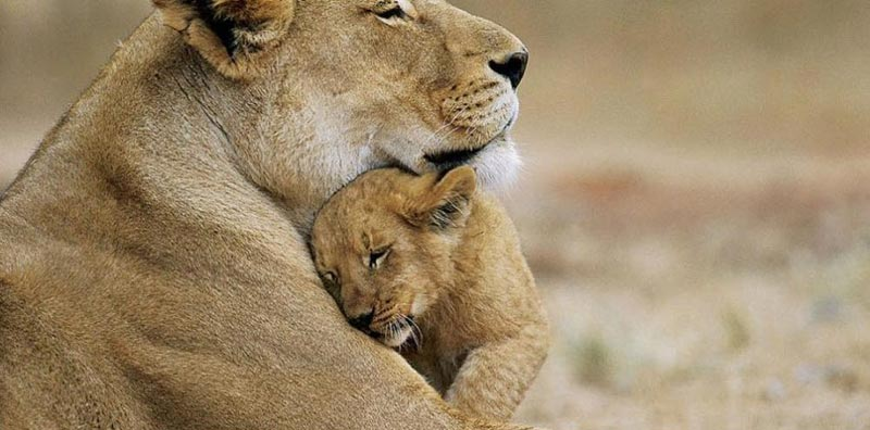 Short Tour Of Gujarat Wildlife