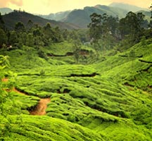 Kerala Greenary Package