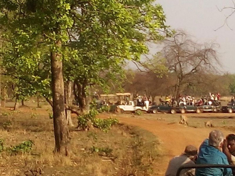 Wildlife Tour in Madhya Pradesh Tour