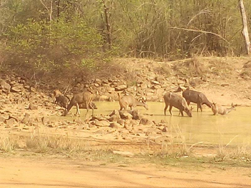 Wildlife Adventure Tour In Odisha (Orissa)