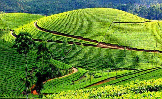Ooty Coorg Hills With Wayanad Tour