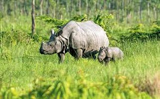 Kaziranga 2 Nights/3 Da Tour