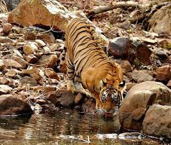 Ranthambore 2 Nights/3 Days Tour
