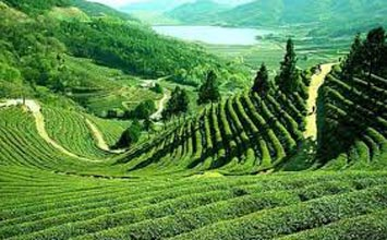 Beautiful Darjeeling Tour