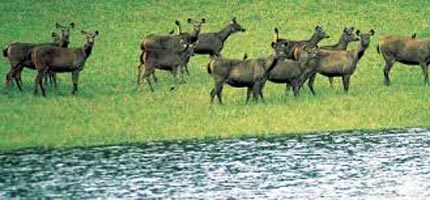 Bandipur and Ooty Tour(Summer Special)