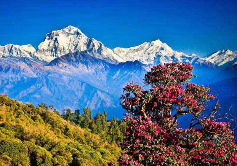 Natural Nepal  Tour