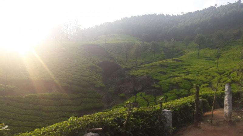 Blissful Kerala 4 Nights/ 5 Days package