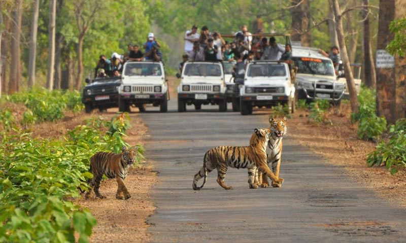 Rajasthan Tiger Safari Tour