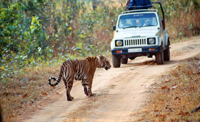 Corbett Safari Weekend Tour