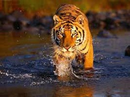 Ranthambore Weekend Gateway Tour