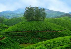 Nature Trail - Kerala Tour