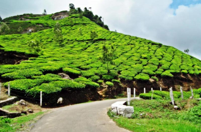 Kerala Winter Package (06N / 07D)