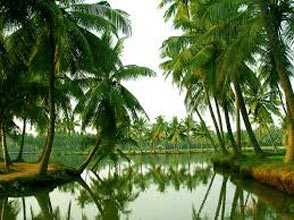 Andaman Package Half Day Tour
