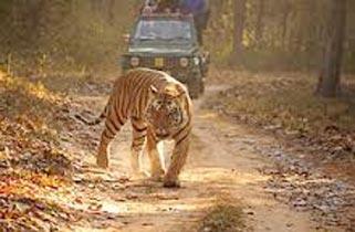 Bandhavgarh - Pench - Kanha Tour