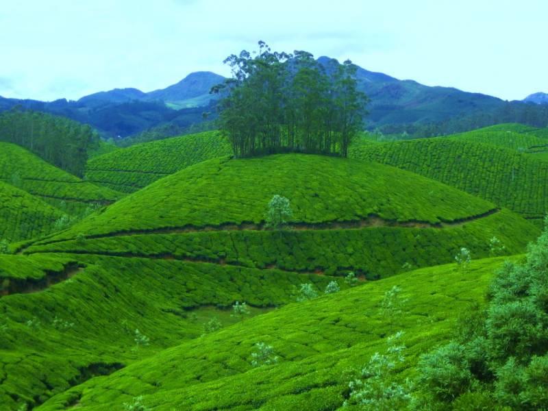 Kochi – Munnar-thekkady – Alleppey -kovalam – Poovar-trivandrum Tour