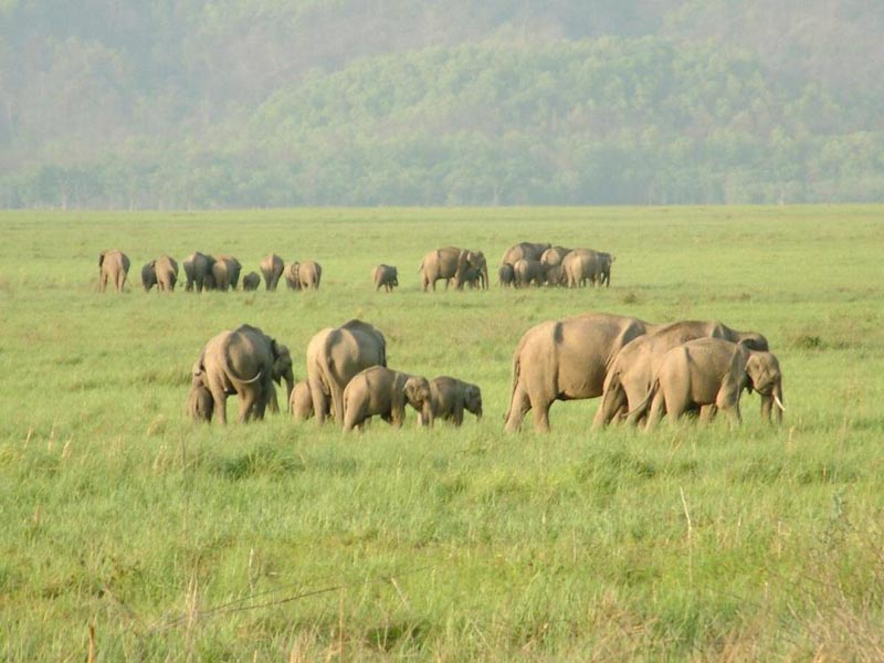 Short Escape to Corbett Tour