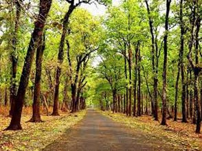Jaldapara National Park - Chilapata  Tour Package -  02 Nights / 03 Days
