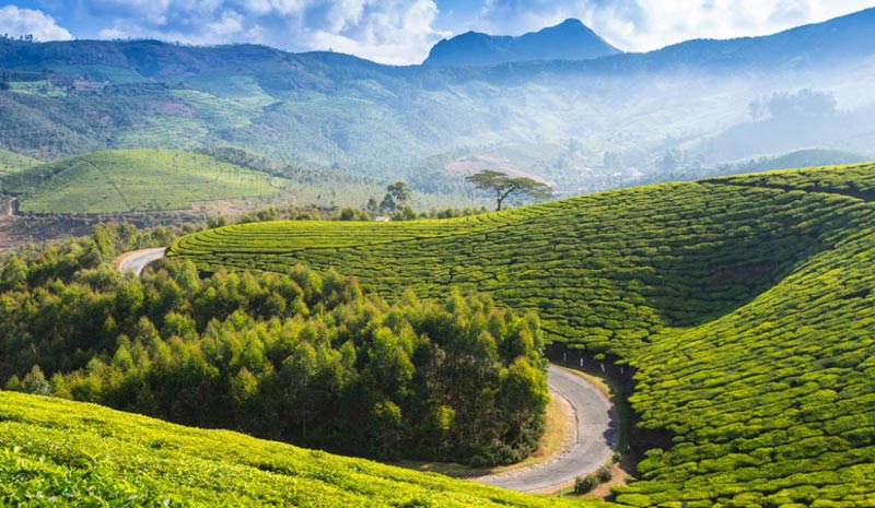 Hill Stations in South India Tour