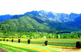 Kashmir Tour With  Leh