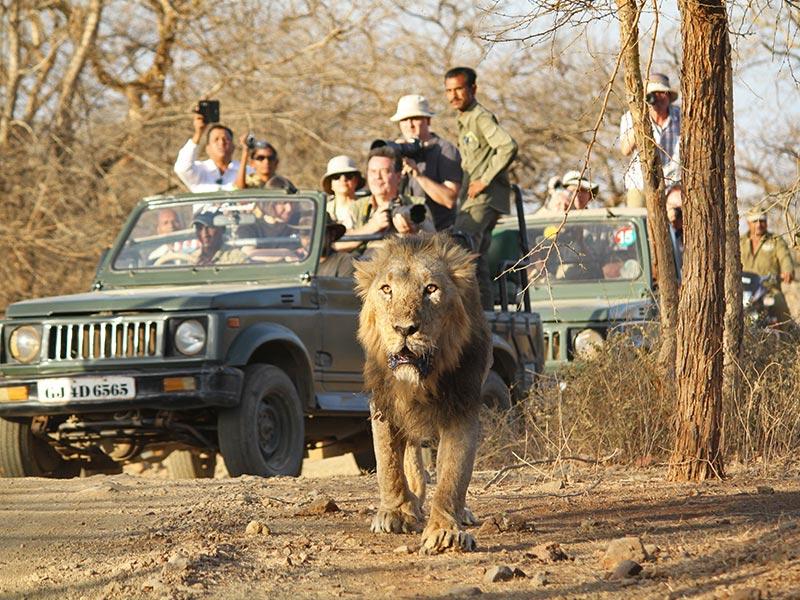 Gir National Park Tour